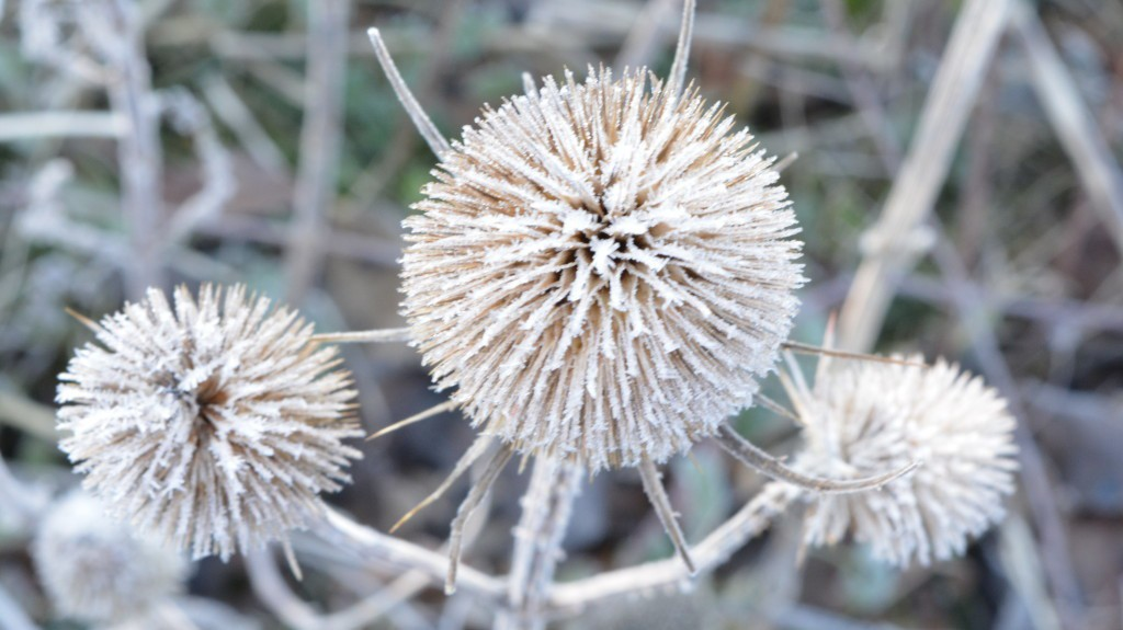 Frosty seed head Vicky Myers Creations