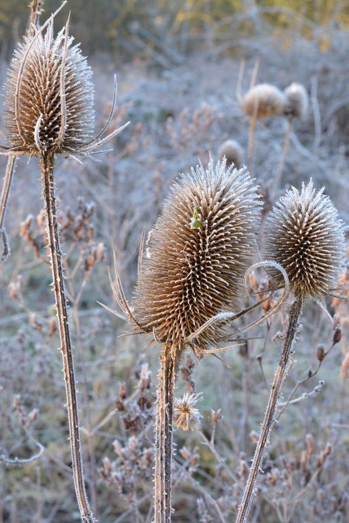 Vicky Myers Creations Seed heads