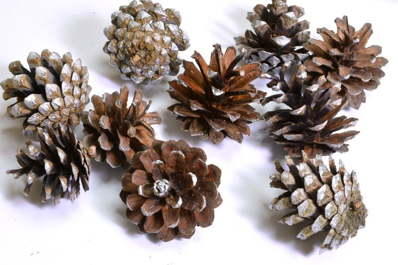use-what-you-have-and-save-money-this-christmas-paint-the-edges-of-pine-cones-with-acrylic-paint