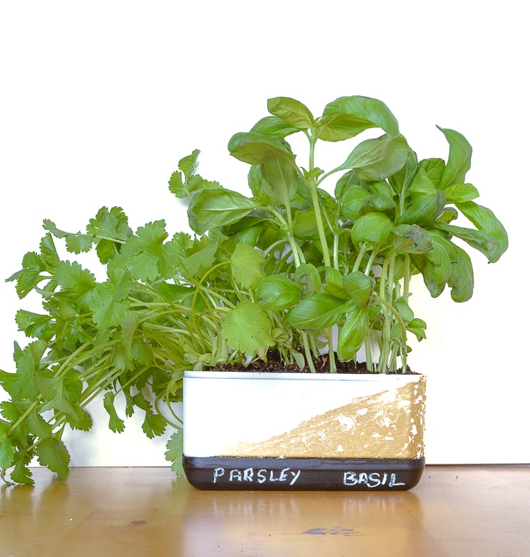 Looking to brighten up your kitchen with a DIY herb garden planter? Learn how to upcycle a Ferrero Roche box into an indoor herb garden box complete with it's own watering tray #herbgardenplanter #indoorhouseplant #kitchenideas #windowsillbox